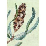 Banksia (single)